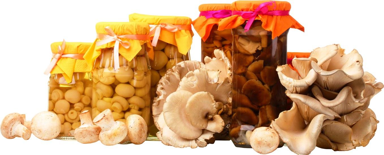 грибы4